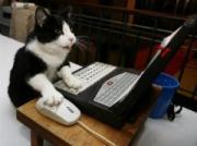 コンピューターで遊ぶネコの「Zoe」 2007年 ロイター/Shannon Stapleton
