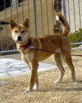 徳島県神山町の県動物愛護管理センター