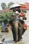 タイ中部アユタヤ県で
