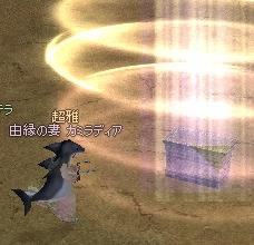 砂漠のサメw