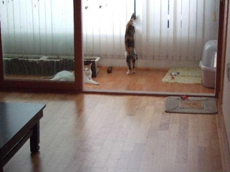 2007_07210218.jpg