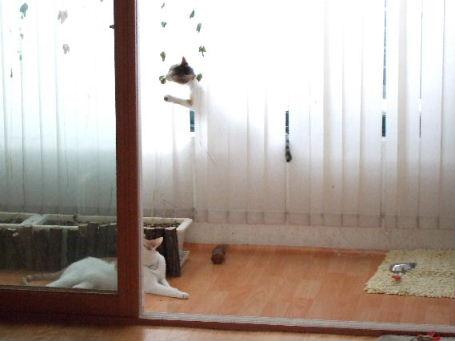 2007_07210220.jpg