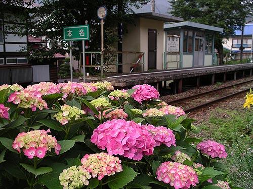 honnaajisai1.jpg