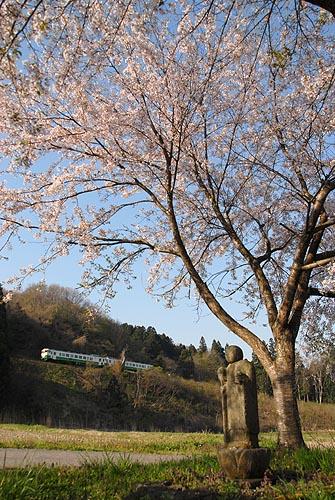 sakamosakura.jpg