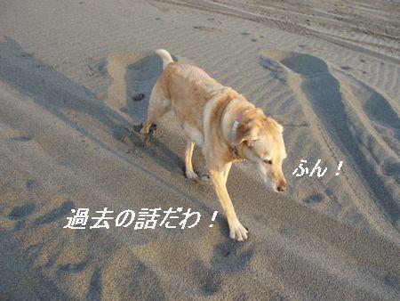 砂の上を歩くとダイエットになるそうですよ。