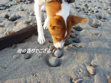 鼻の頭が砂だらけですけど・・・