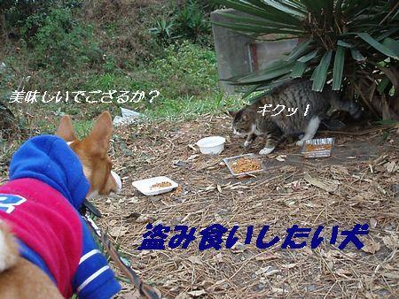猫を見るとモヒカンになるKENTO