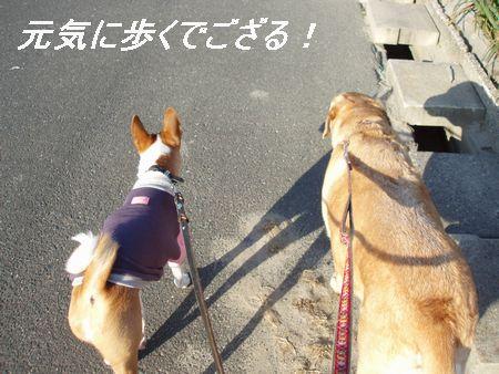 今日は仲良く歩いているわ・・・