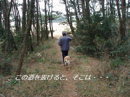 チョッピリ寂しい松林。