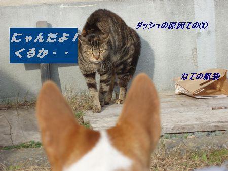 はなケン地方はのら猫だらけです。
