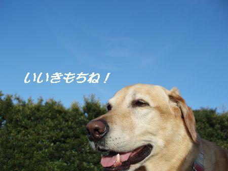 空が真っ青です。