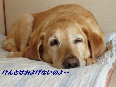 いつもの昼寝スタイルのはなちゃん!