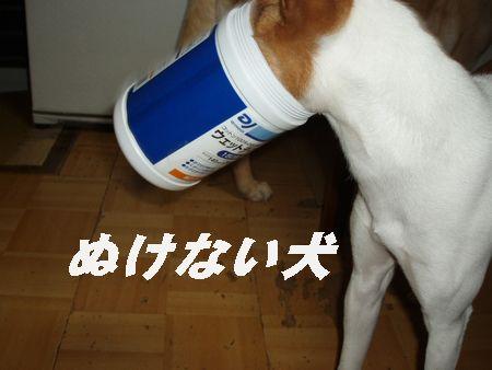 おバカな犬の見本でござる!