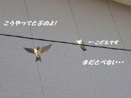 無事に飛べたかな・・