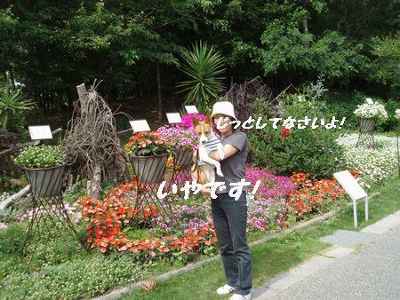 花と花(ママ)とはなちゃん