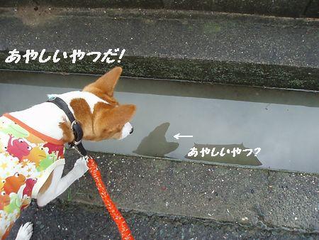 雨の日の散歩はイヤデス!
