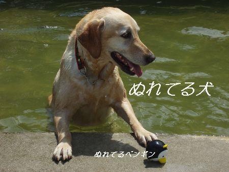 泳ぎ大好きHANAちゃんです。