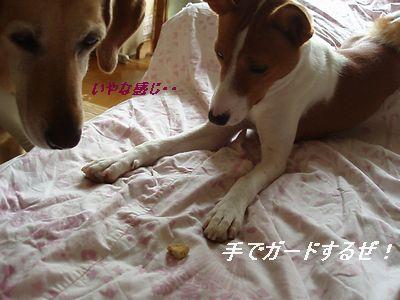 姉ちゃん、食うなよ!