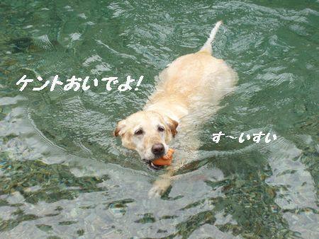 はなちゃんは泳ぎが上手です。