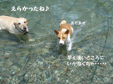 はなちゃんを泳がせて上げたいから・・