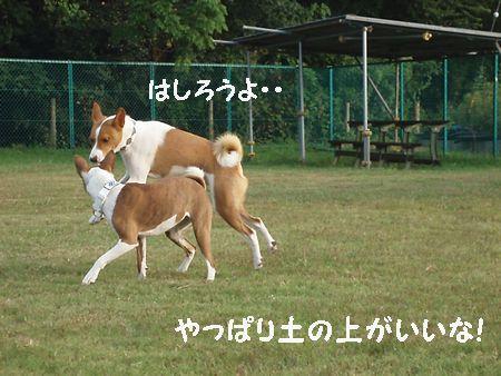 犬禁止は怒れたね!