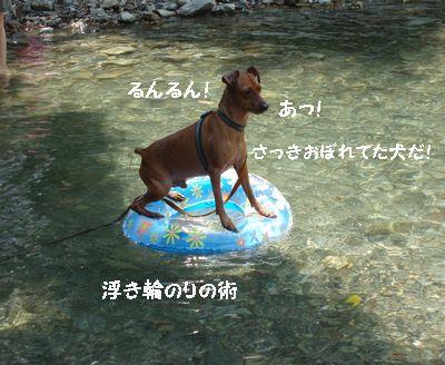 この子の泳ぎはすごかった!