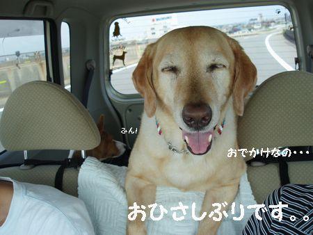 ちょっと、ドライブに行きましょう。