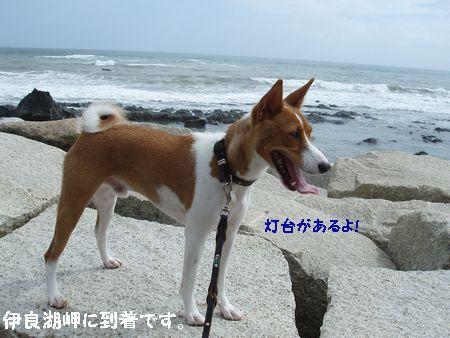 やっと、伊良湖に着きました。
