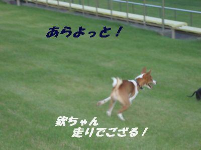 この走りは、なかなか難しいでござる!