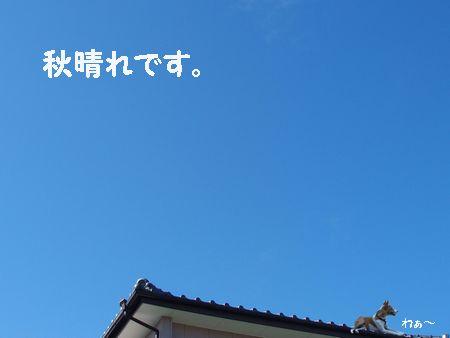 雲ひとつない青空です。