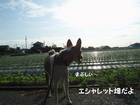 ふ~ん! 東は茨城 西は大阪からの参加ですって。