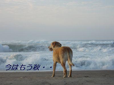 今日の海は少し荒れてるわ・・・釣りは無理ね!