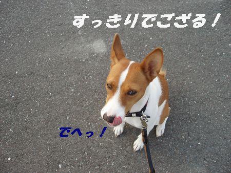 ひとさわがせだなぁ~ なんにもいないじゃん!!