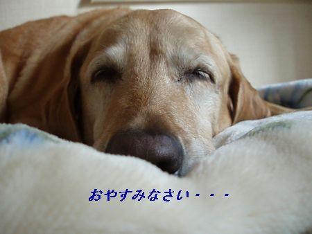 私も寝たいです。