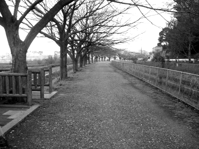 散歩道(メイン)