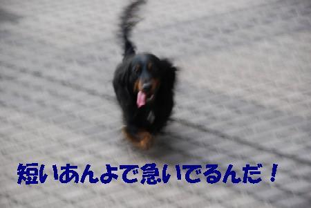 20070809170120.jpg