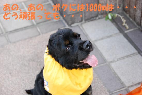 20071004133636.jpg