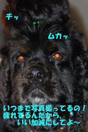 DSC_0014b.jpg