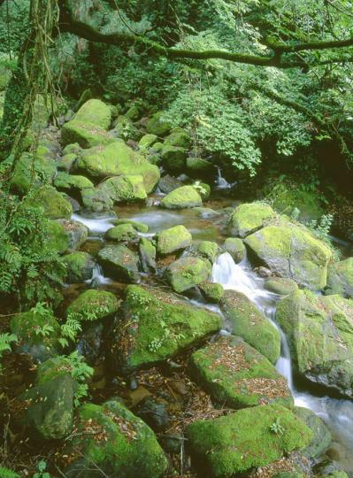苔的な緑色02