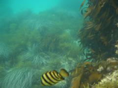 角島の海 2