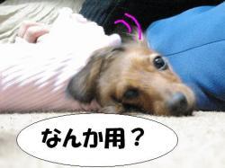 20060325204457.jpg