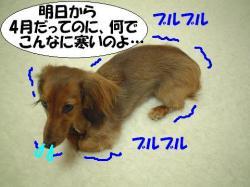 20060330193430.jpg