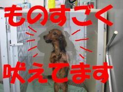 20060403224141.jpg