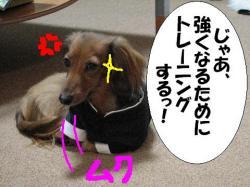 20060406205955.jpg