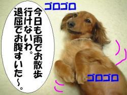 20060411215210.jpg