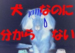 20060411215341.jpg