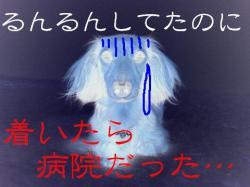 20060412215713.jpg