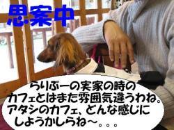 20060416222024.jpg