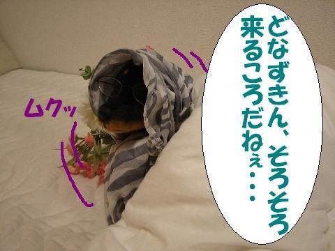 20060519215032.jpg