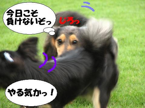 20060713235017.jpg
